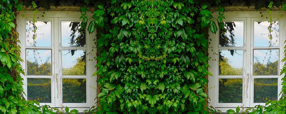 Fenêtre bois et végétation